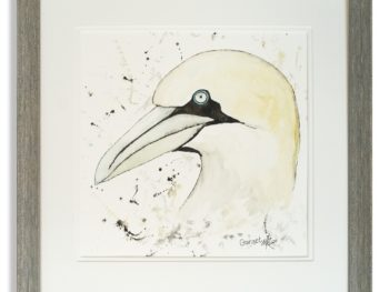 Watercolour of Gannet by Scottish Artist Mike Ross